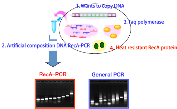 Gene amplification
