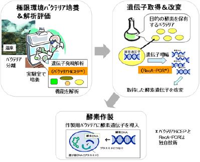 高性能酵素技術