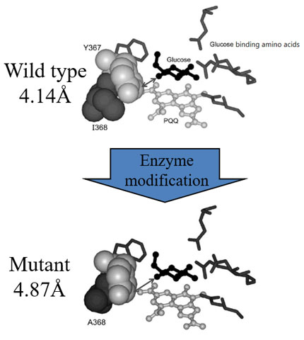 Analysis of enzyme mutants