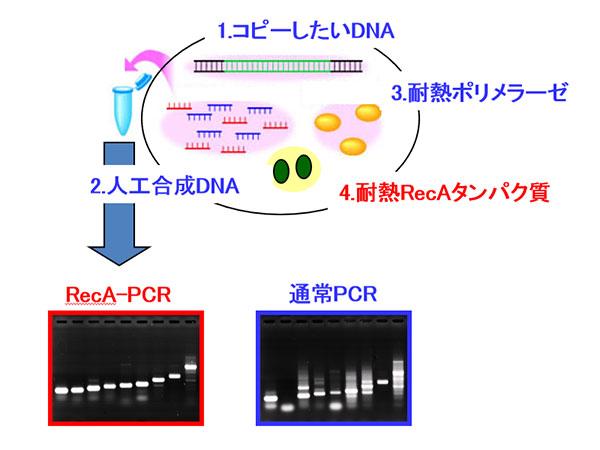 遺伝子増幅技術
