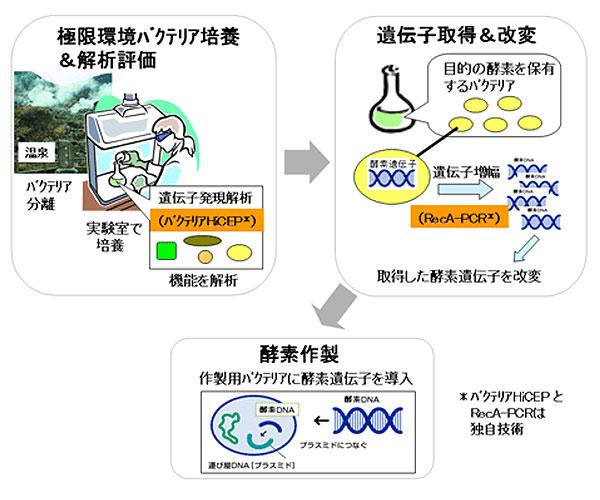 高性能酵素設計技術