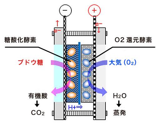バイオ燃料電池の原理